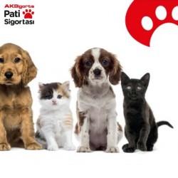Ak Sigorta Yıllık Evcil Hayvan Pati Sigortası